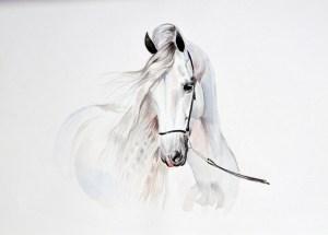 Horse Behavior Problems. - How To Avoid Them