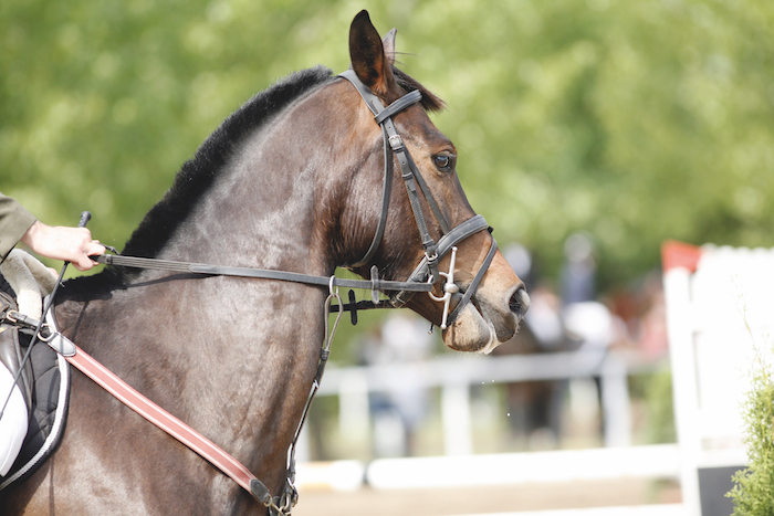 What are signs that a horse is resisting the contact?