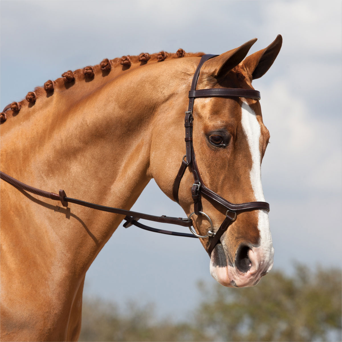 Know your nosebands