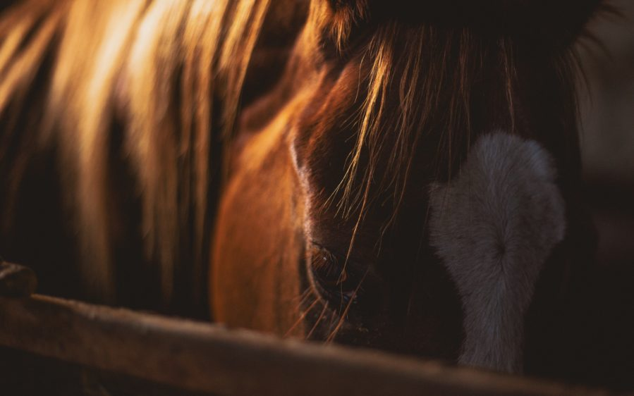 How did the Quarter Horse get his name?