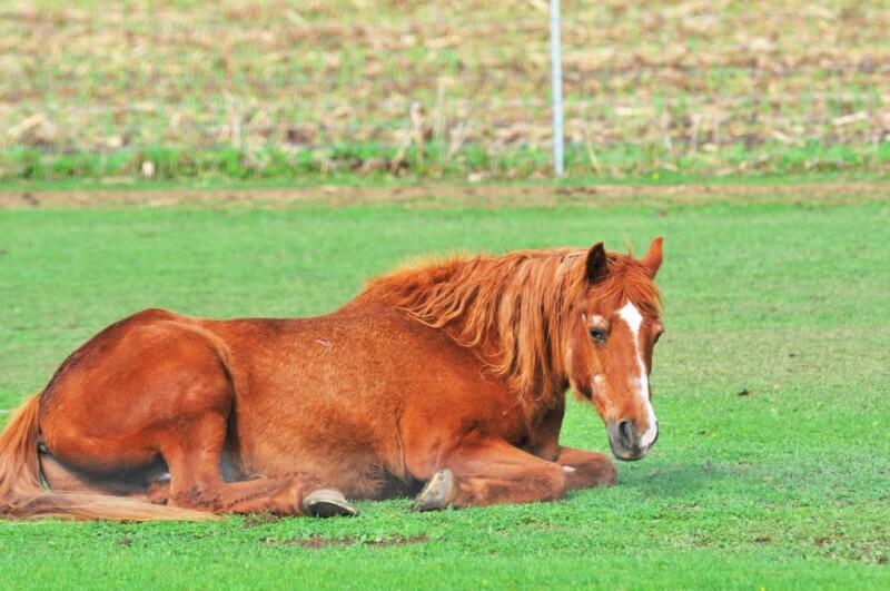 My horse won't lie down! | NZ Horse & Pony