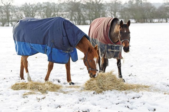 Get those rugs off at least once a week to check your horse's condition (Image: Dreamstime)
