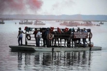 Chincoteague,VA - 7/24/13 -  A barge transfers 'saltwater cowboys' and their horses to the ponies' landing spot in preparation for the swim. Behind them, red smoke goes off, signaling the soon start of the swim. Erin Kirkland/Baltimore Sun --