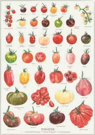 Køkkenhaven, Frugt & Grønt