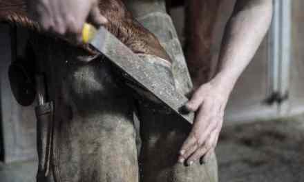 Lær hvordan du fjerner en løs sko uden at skade hoven