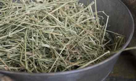 Brug grovfoderanalyser til at optimere foderplanerne til dine heste og økonomi