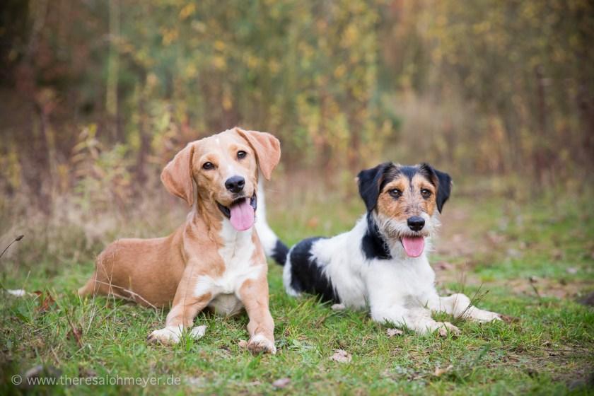 Sita und Lori bei einem gemeinsamen Spaziergang