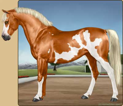 realistic horse breeds # 26