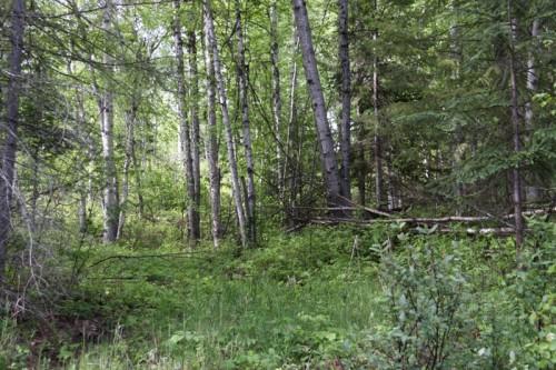 2.8 acres on Horsefly Landing Road