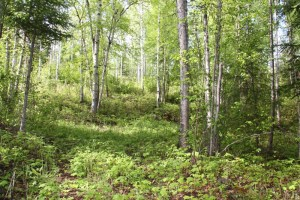 Building Lot Close to Horsefly Lake - Lot 14 Horsefly Landing Road, Horsefly, BC
