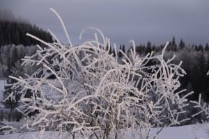 hoar frost