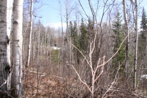 2 acre lot near Horsefly Lake