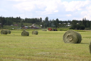 summertime haying