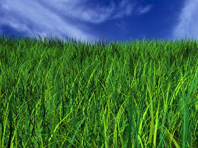 grass-small