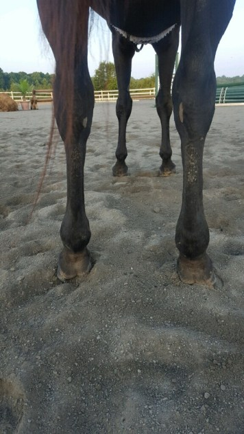 After: Hind legs after 2 wrap uses
