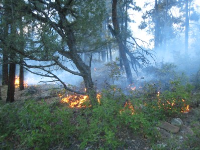 This fire for resource benefit provided a valuable service of reducing the fuel loading in this mixed conifer forest.