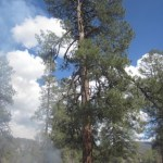 Earliest lightning-strike fire on record during this blogger's career in fire management