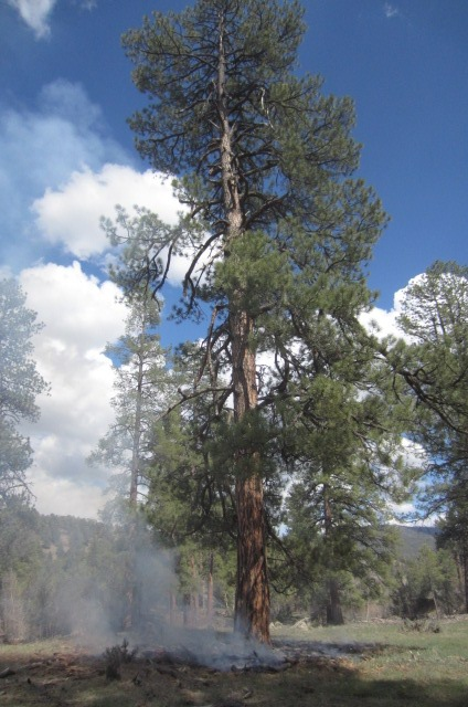 This lightning-strike fire was found on May 7,2013 in Ignacio Canyon. It is one of the earliest fires that this this blogger has been on in recent memory.
