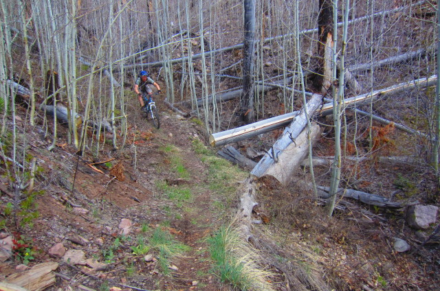 This trail takes a lot of work to keep clean due to dead trees constantly falling across it.
