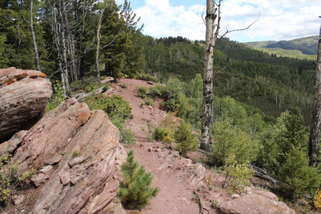 Big Lick Trail on the San Juan National Forest has some epic views when you get about half way down.