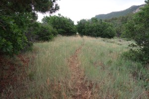 Caps Trail