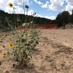 Open letter to County Environmental Specialist encouraging revegetation of Horse Gulch Road