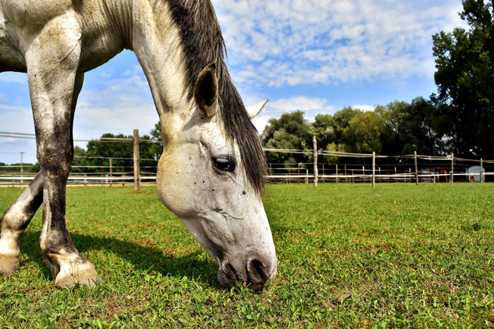 healthful benefits for horses
