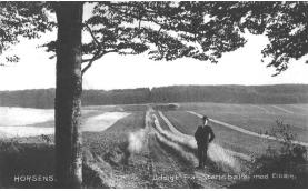 Elbækskov set fra Stensballe. Postkort fra 1905.