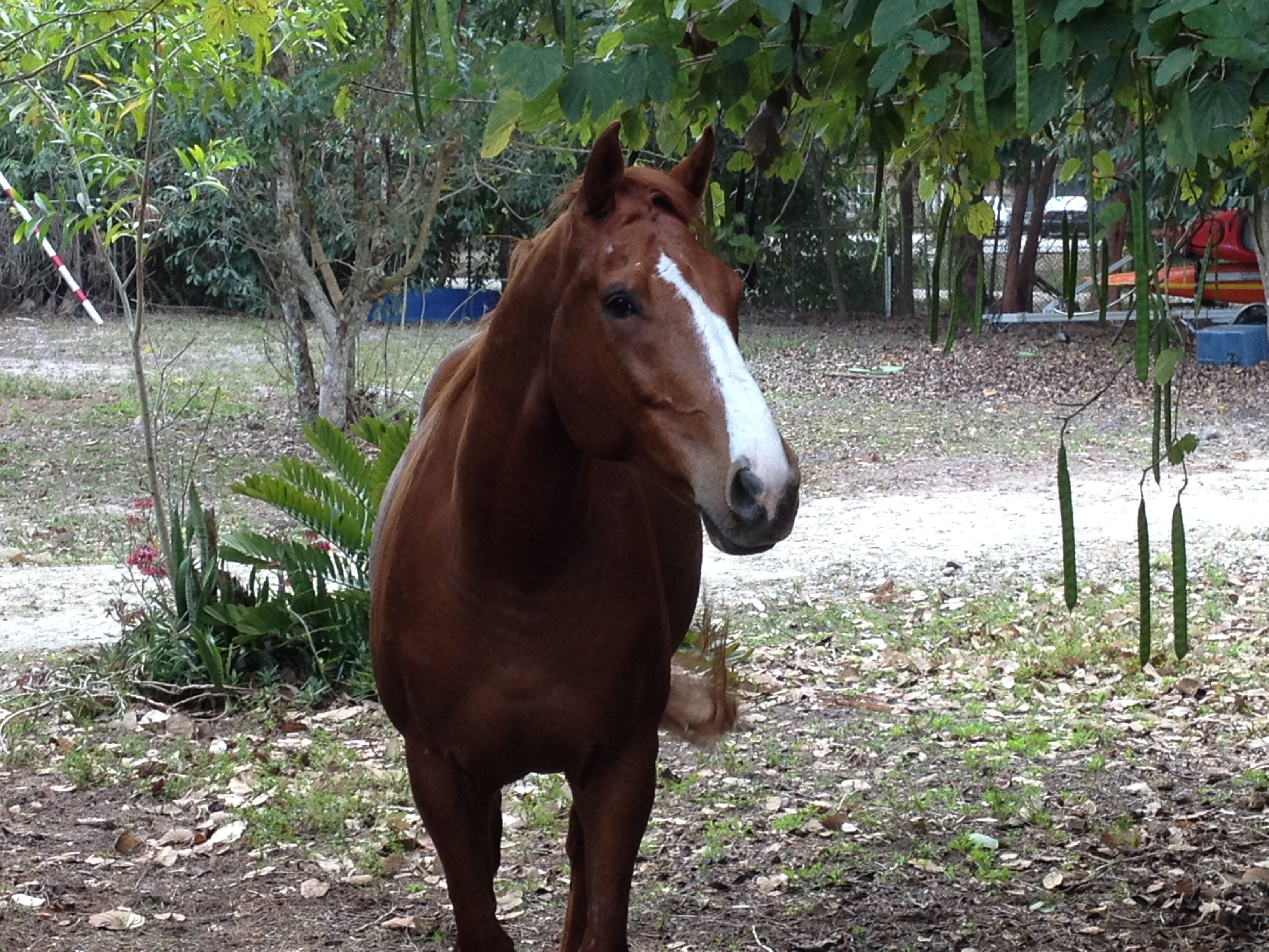 Available Horses « Track To Trail Thoroughbreds