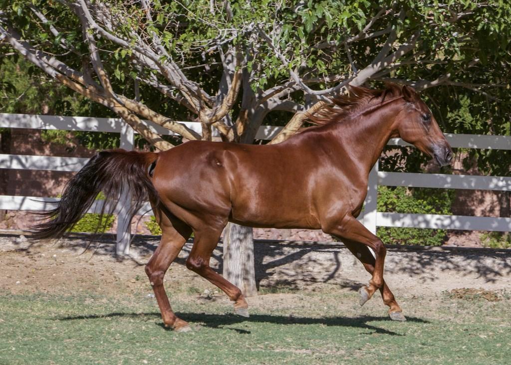 Horse Adoption - Rita