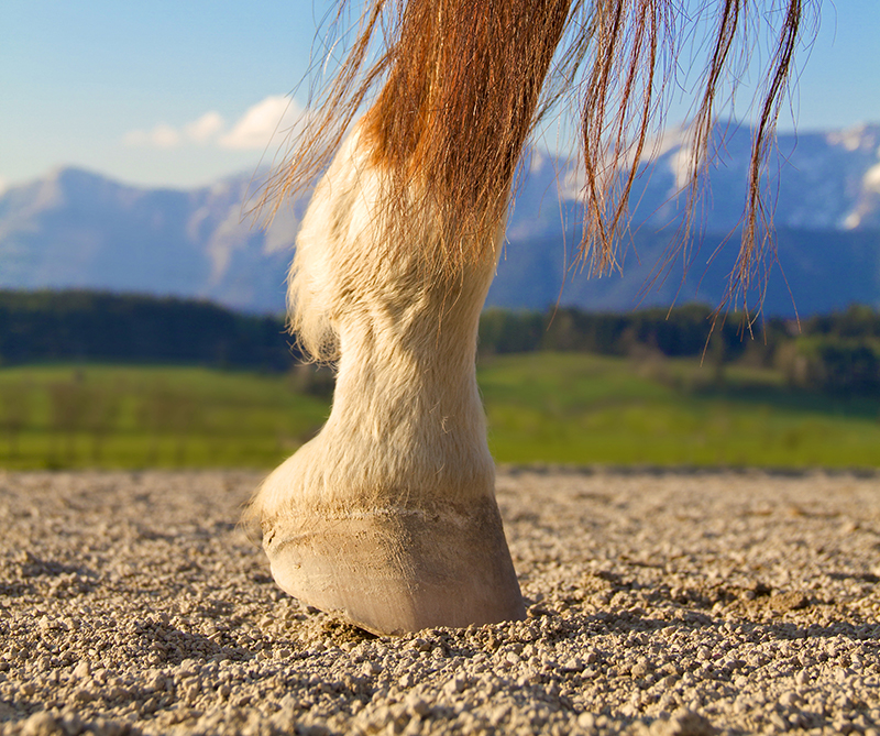 Proper Basic Foot Care in Horses