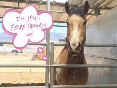 Jed - Dust Devil Ranch Sanctuary for Horses