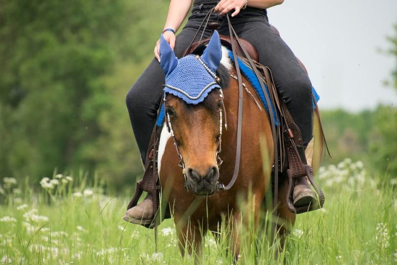 89315a413b50 Horseback Riding  What to Wear (With Pictures)