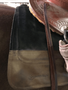 6 Best Saddle Pads for Trail Riding (And Happy Horses)
