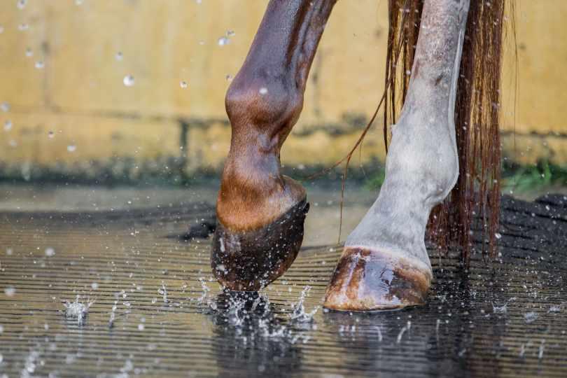 horse lifestyle photography