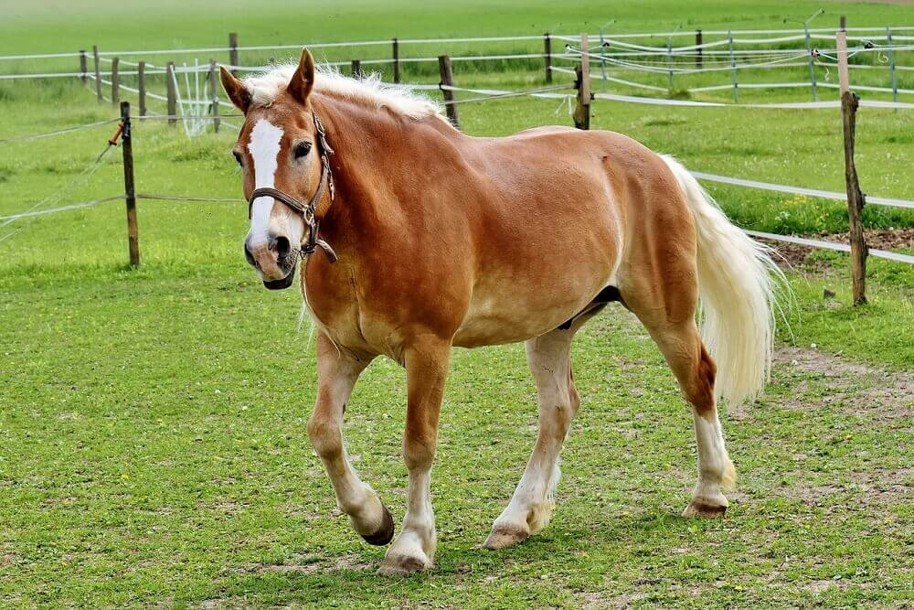 Horse Breeds Quiz 15 Questions And Answers That Will Test You