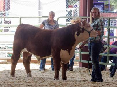 Whitney and the Grand Champion Bull, to check out bulls like this go to bbcattle.com