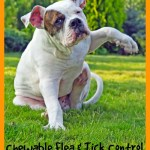 Dog Owners Rejoice – Chewable Flea & Tick Control #12Bravecto