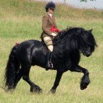 Outlander Scottish Horse Breeds Horses In Movies Tv