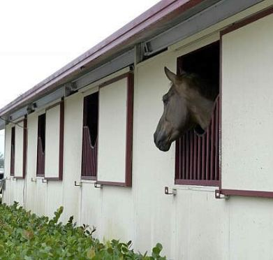 James Lala Keeps Horses' Safety First Stepping Up Biosecurity at His Wellington Quarantine