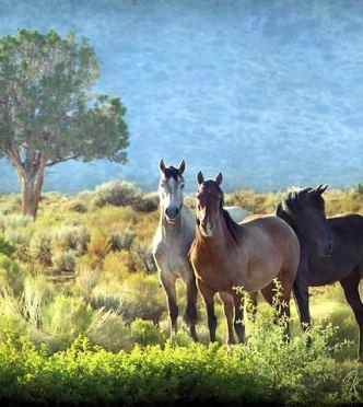 President Obama Moves to Make Horse Slaughter Illegal