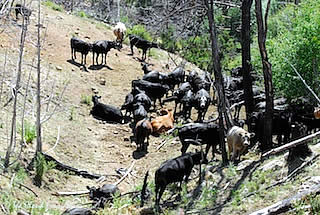 Action Alert! Urge Rejection of the Grazing Improvement Act of 2013