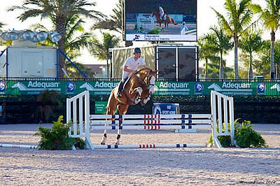 Live Stream Available for the WEF Sport Horse Auction Featuring VDL Stud