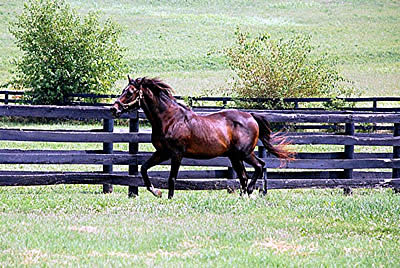 Clever Allemont, 32, Euthanized at Old Friends