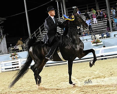 Smith Lilly and Central Perk Win Five-Gaited Saddle Horse Stake at Devon Horse Show
