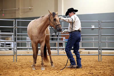 Ray Ainsworth Teaching Horses for Charity