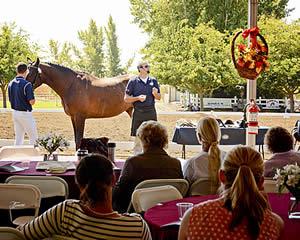 USA Equestrian Trust Opens 2015 Grants Program for Equine Non-Profits
