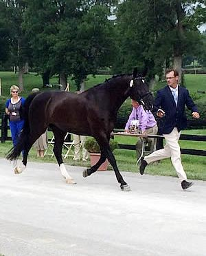 US Riders Prepare Horses for North American Jr. Young Rider Para-Dressage Championships