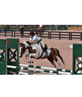 Summer Victories Continue in the Premier Equestrian 0.80m Low Jumper Division in Tryon
