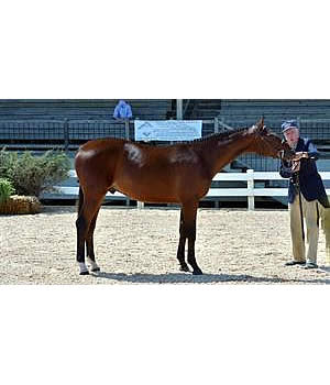 Solaris EMF Named Overall Grand Champion of US Hunter Breeding National Championship